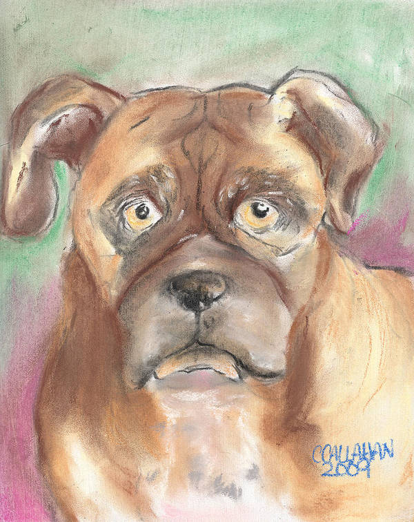 Animals Print featuring the pastel Old Boxer by Christine Callahan