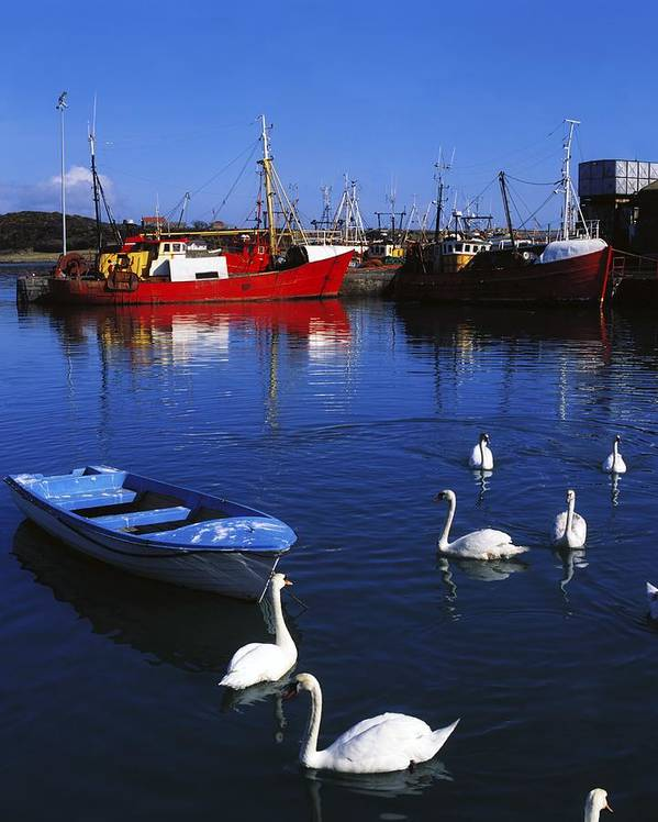 Ardglass Print featuring the photograph Ardglass, Co Down, Ireland Swans Near by The Irish Image Collection