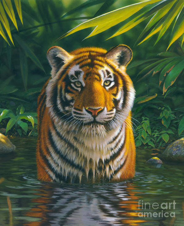 Animal Print featuring the photograph Tiger Pool by MGL Studio - Chris Hiett