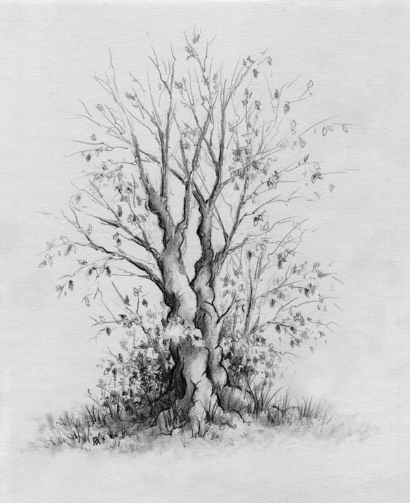 Pencil Print featuring the drawing Young Tree by Rachel Christine Nowicki