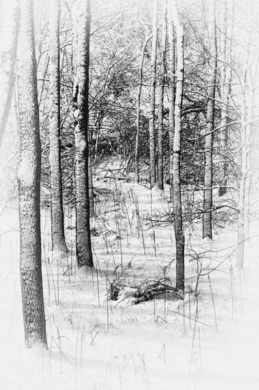 Antique Print featuring the photograph Forest In Winter by Tom Mc Nemar