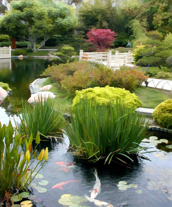 Deep Panorama Of Japanese Garden And Koi Print By Elaine