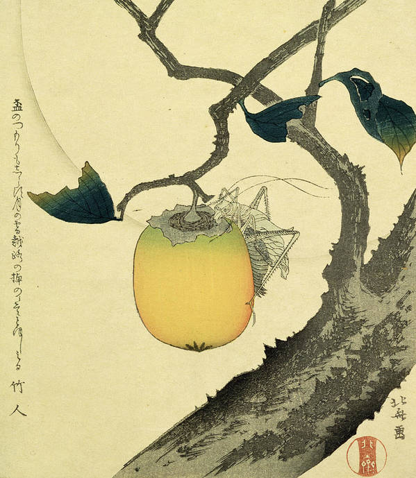 Japanese Print featuring the drawing Moon Persimmon And Grasshopper by Katsushika Hokusai