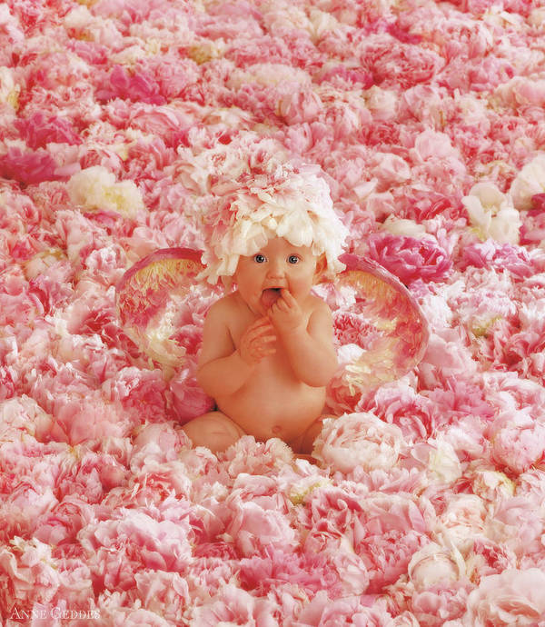 Angel Print featuring the photograph Peony Angel by Anne Geddes