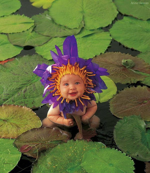 Flower Print featuring the photograph Waterlily by Anne Geddes