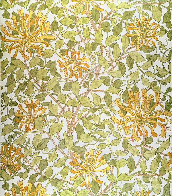 Arts And Crafts Movement; Floral; Pattern Print featuring the painting Honeysuckle Design by William Morris