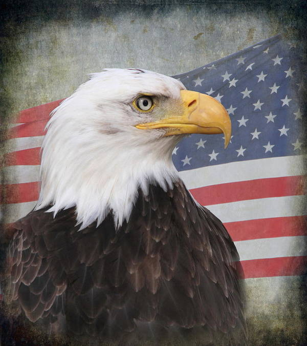 Eagle Print featuring the photograph American Pride by Angie Vogel