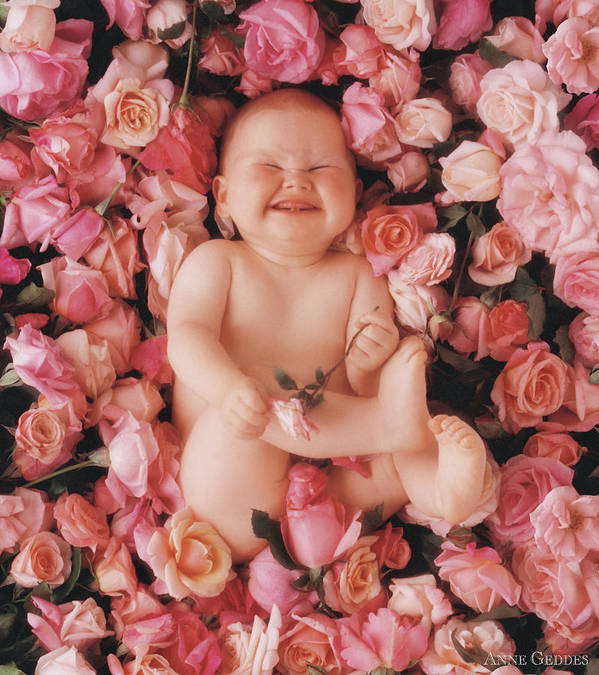 Roses Print featuring the photograph Cheesecake by Anne Geddes