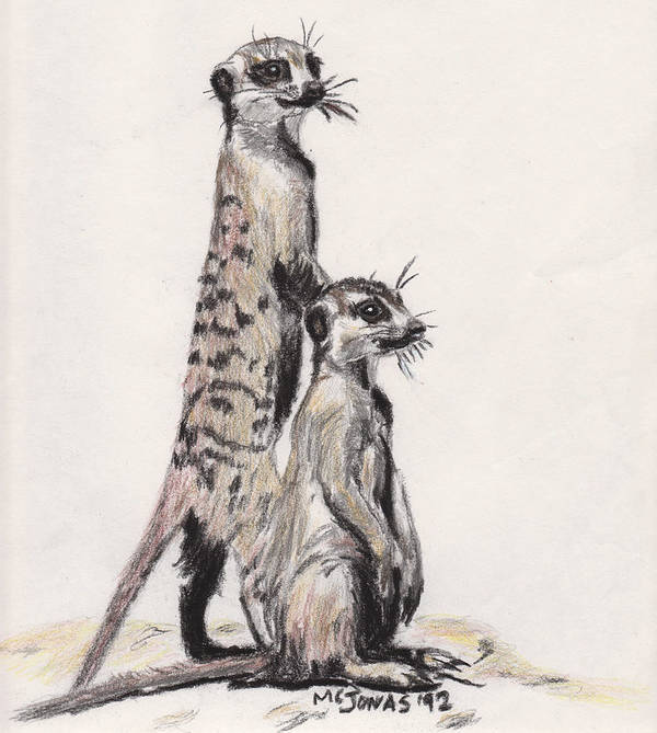 Wildlife Print featuring the drawing Meerkats by Marqueta Graham
