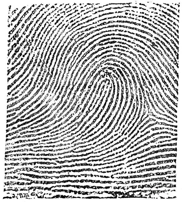 Science Print featuring the photograph Typical Loop Pattern, 1900 by Science Source