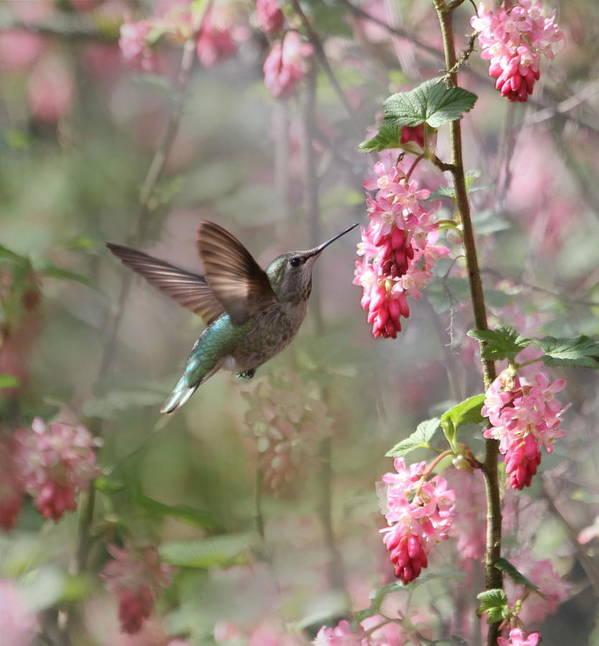 Animals Print featuring the photograph Hummingbird Heaven by Angie Vogel
