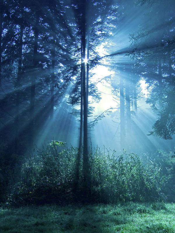 Nature Print featuring the photograph Magical Light by Daniel Csoka