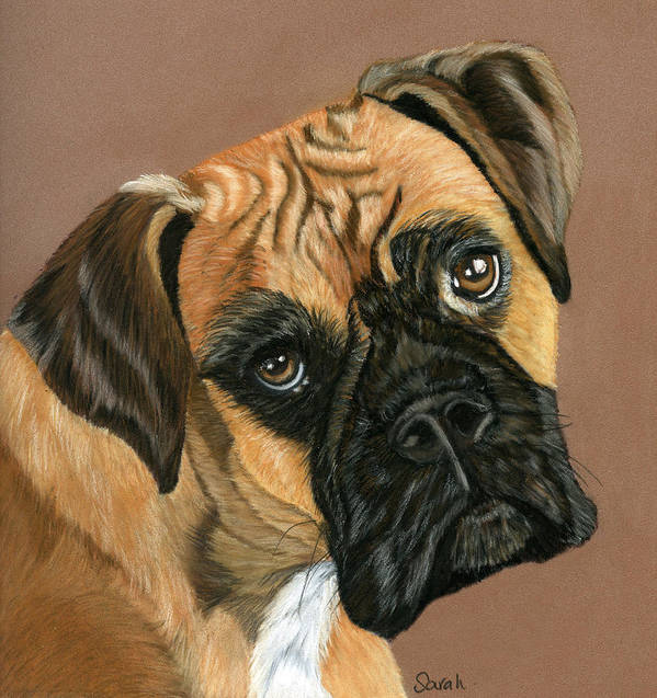 Boxer Dog Print featuring the painting Boxer Dog by Sarah Dowson