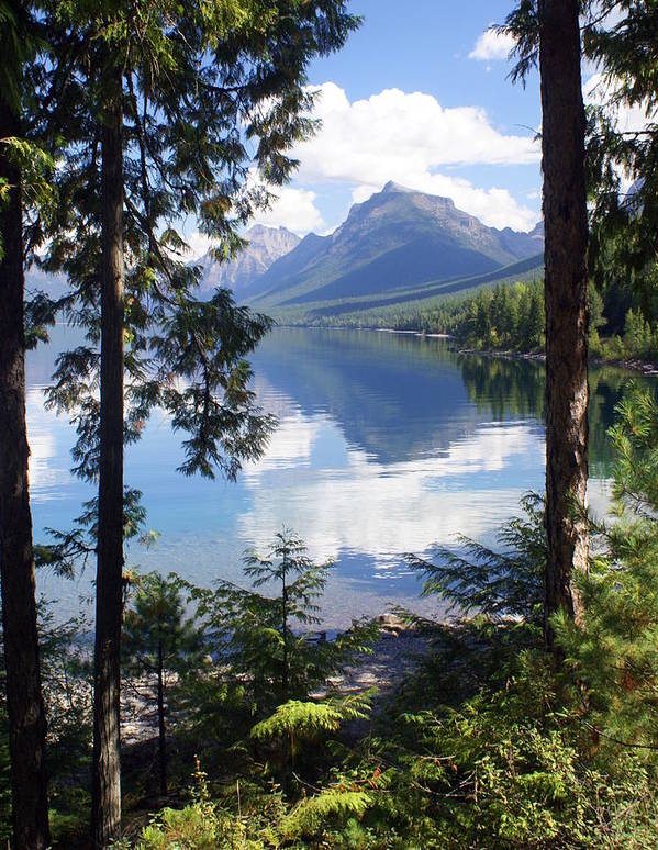 Glacier National Park Print featuring the photograph Lake Mcdlonald Through The Trees Glacier National Park by Marty Koch