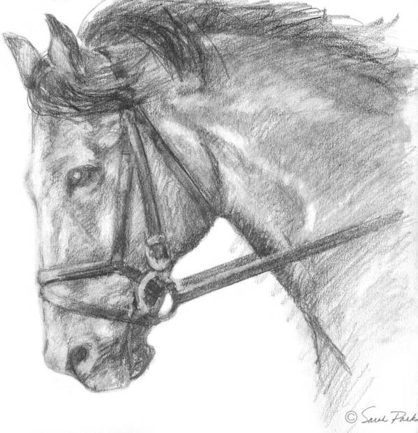 Drawing Print featuring the painting Horse's Head With Bridle by Sarah Parks