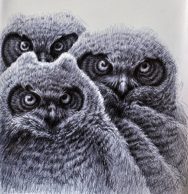Birds Print featuring the drawing Three Amigos by Rick Hansen