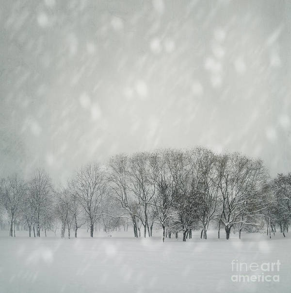 Winter Print featuring the photograph Winter by Jelena Jovanovic