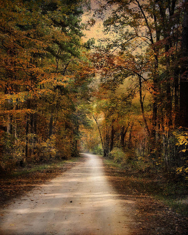 Autumn Print featuring the photograph Autumn Forest 3 by Jai Johnson