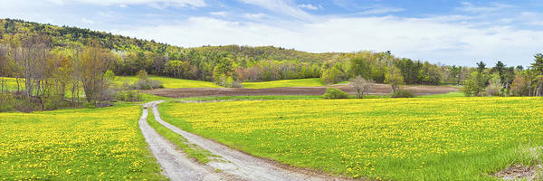 Spring Print featuring the photograph Spring Farm Landscape With Dirt Road And Dandelions Maine by Keith Webber Jr