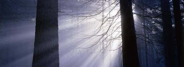 Nature Print featuring the photograph Sun Breaking Through Mists by Ulrich Kunst And Bettina Scheidulin