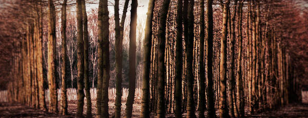 Trees Print featuring the photograph Trees Gathering by Wim Lanclus
