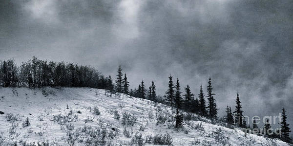 Taylor Highway Print featuring the photograph Melancholia Pines And Trees by Priska Wettstein