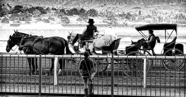 Horse Print featuring the photograph A Casual Observer by Camille Lopez