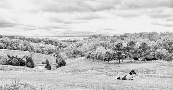 Tennessee Print featuring the photograph Meadow Bw by Chuck Kuhn