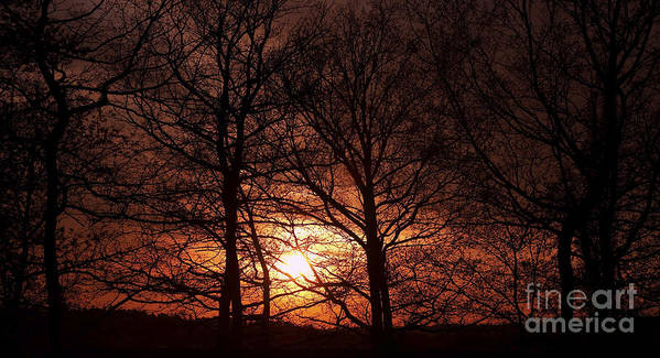 Sunset Print featuring the photograph Trees At Sunset by Michal Boubin
