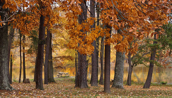 Autumn Trees Print featuring the photograph Autumn View by Sandy Keeton