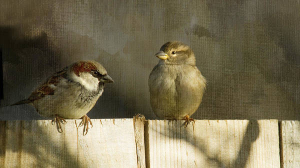 Sparrows Print featuring the photograph Love Birds by Rebecca Cozart