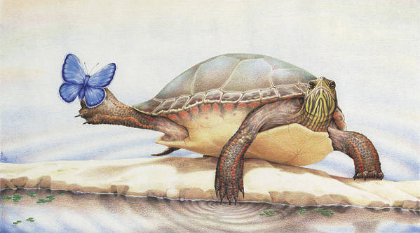 Turtle Print featuring the drawing Alight On Her Toes by Amy S Turner