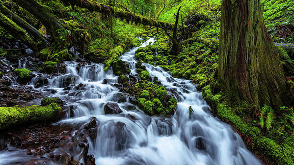 River Print featuring the photograph Wahkeena by Chad Dutson