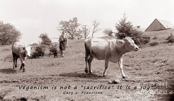 Ableist Print featuring the photograph Veganism Is A Joy by Janice Rae Pariza