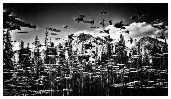 An Inverted Black And White Image Featuring Mountain Peaks Reflected On A Lily Pad Laden Pond In Colorado's Rocky Mountain National Park. Print featuring the photograph Peaks And Pads by Kevin Munro