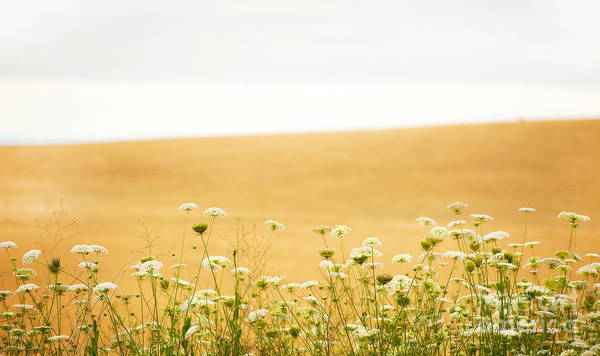Grassy Hill Print featuring the photograph Run With Me Through A Field Of Wild Flowers by Artist and Photographer Laura Wrede