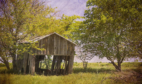 Abandoned Print featuring the photograph This Old Barn by Joan Carroll