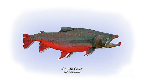 Arctic Char Print featuring the painting Arctic Charr by Ralph Martens