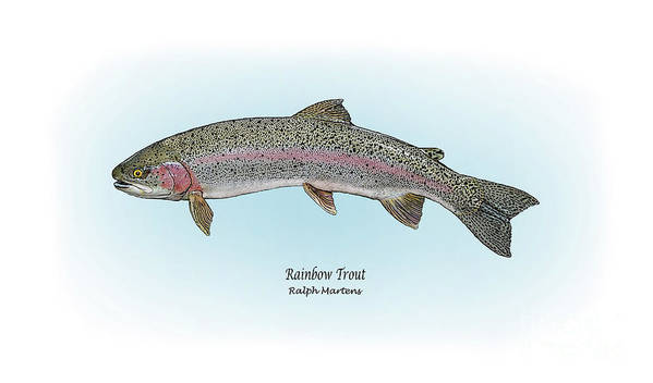 Rainbow Trout Print featuring the painting Rainbow Trout by Ralph Martens