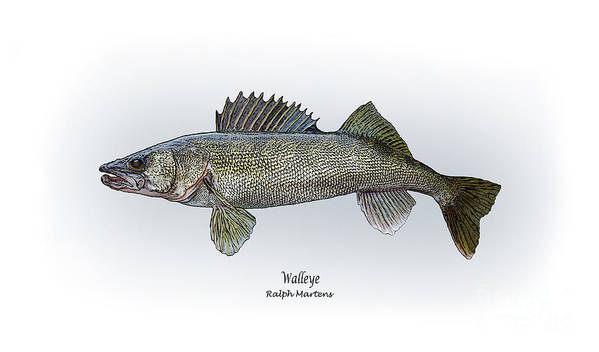 Walleye Print featuring the painting Walleye by Ralph Martens