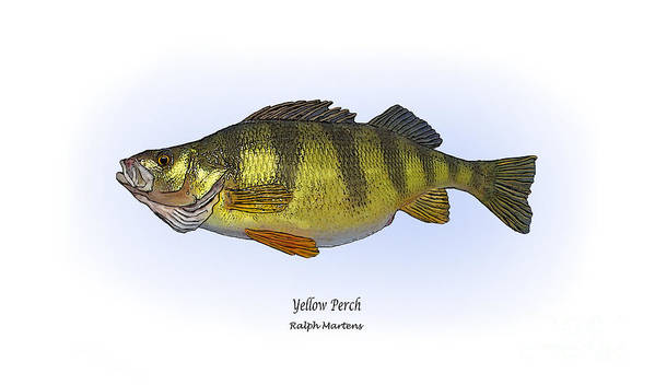 Yellow Perch Print featuring the painting Yellow Perch by Ralph Martens
