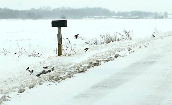 Indiana Scenes Print featuring the photograph Winter Foragers by Julie Dant