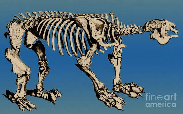 History Print featuring the photograph Megatherium Extinct Ground Sloth by Science Source