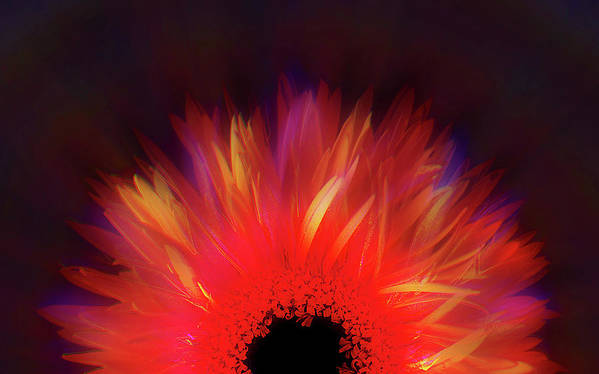 Avantgarde Print featuring the photograph Feathered Floral by Li  van Saathoff