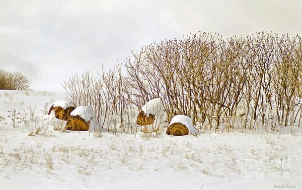 Hay Print featuring the photograph Winter Beauty by Deborah Benoit
