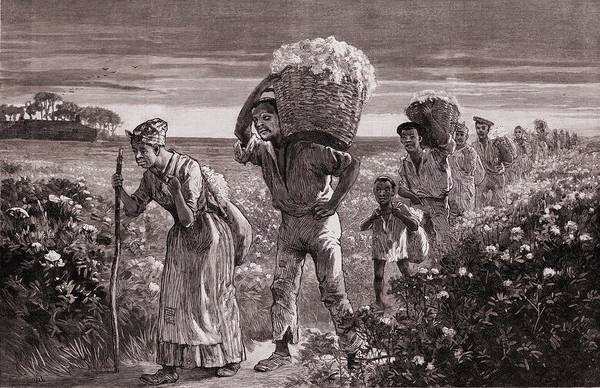 History Print featuring the photograph African Americans Leaving A Cotton by Everett