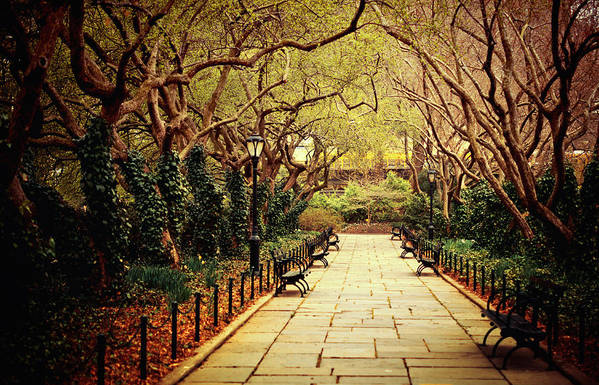 Spring Print featuring the photograph Urban Forest Primeval - Central Park Conservatory Garden In The Spring by Vivienne Gucwa
