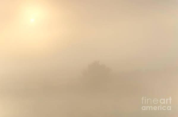 Fog Print featuring the photograph Breaking Through by Mike Dawson