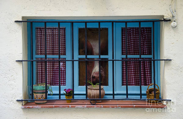Buy Art Online Print featuring the photograph Horse Behind The Window by Victoria Herrera