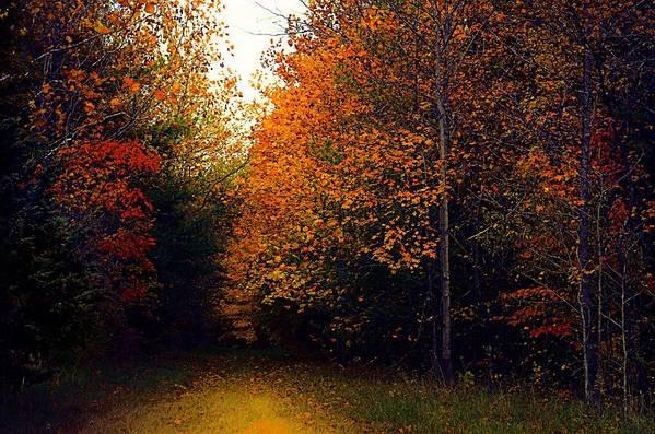 Autumn Print featuring the photograph On Jan's Farm by Julie Dant